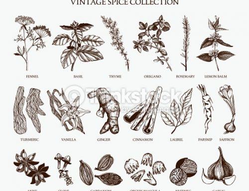 Spezie ed erbe aromatiche – Uso quotidiano e collezionismo